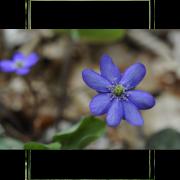 Les plantes nous racontent